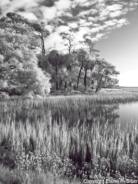 Botany Bay marsh in black and white