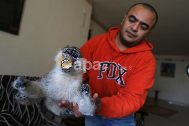 Rasheed Anbar, a 33 year-old Palestinian man, uses dead animals for embalming at his home in Gaza city on March 04, 2019. Anbar embalming dead animals and displays it in schools and kindergartens for educational purposes. Photo by Ashraf Amra
