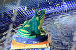 Close up of frog in fountain in Plaza de Espana, Vejer de la Frontera, Cadiz Province, Spain