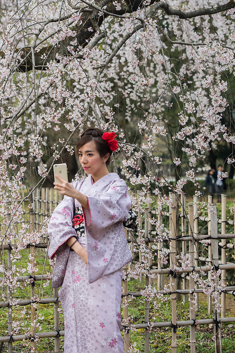 Japan, Kyoto. Japan, Kyoto. Chinese women tourists dressed in kimonos enjoying the cherry blossoms in Kyoto Gyoen National Garden. Model released