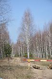Wald in Brjansk mit Strahlenwarnzeichen.