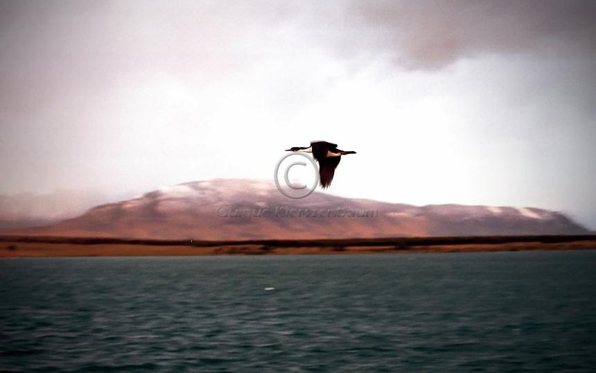 Puerto Natales, Chile, Marzo 2001.