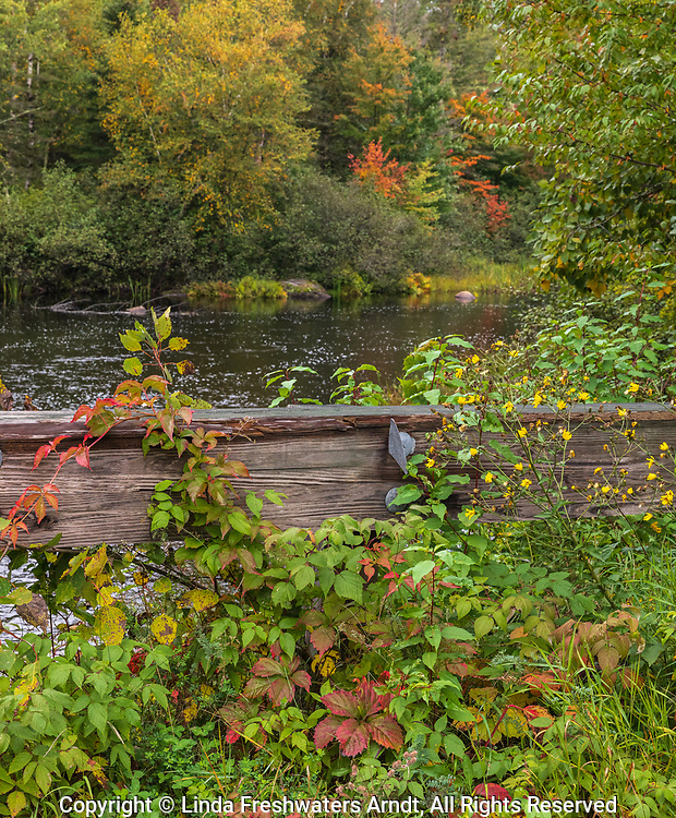 Vegetation growing next to an old bridge crossing the Chippewa River in the Chequamegon National Forest.