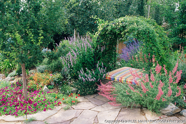 Susan Blevins of Taos, New Mexico, created an elaborate home garden featuring containers, perennial beds, a Japanese themed path and a regional style that reflectes the Spanish and pueblo architecture of the area. Pink Agastache, blue Russian Sage and pale gray Agastache create  cozy garden niche under a honesuckle vine.