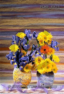 Marek, FLOWERS, BLUMEN, FLORES, photos+++++,PLMPK825,#f#