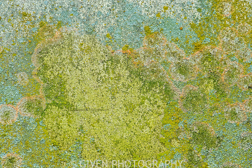 Abstract of lichens