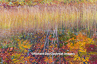 64776-01511 Pond and fall color reflection Alger County Upper Peninsula Michigan