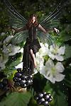 fairy standing on a blackberry bush