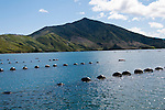 New Zealand, South Island, Green Mussel Cruise out of Havelock, Marlborough, on ship Odyssea to see mussel farming and scenery in Kenepuru Sound. Photo copyright Lee Foster. Photo #126179