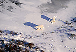 Polar bears, Churchill, Manitoba, Canada