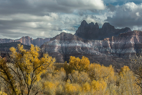 Fall colors have arrived  in Southern Utah near Zion National Park, Utah
