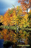 AU08-015a  Forest - autumn leaves along pond