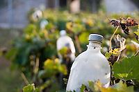Basilicata 2010 - Vita rurale - Vitigno: particolare di bottiglie in plastica utilizzate per contenere sostanze in grado di mantenere lontano gli insetti.