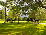 Evening sunlight adds to the tranquility of Killarney National Park as two jaunting cars take tourists on a trip through the Killarney Demesne this weekend ahead of the Tidy Town Awards..Picture by Don MacMonagle