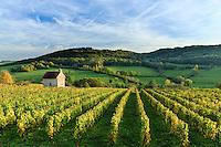 France, Côte-d'Or (21), Alise-Sainte-Reine, vignoble et cabane de vigne // France, Cote d'Or, Alise-Sainte-Reine, vineyard and vineyard hut
