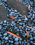 Lincoln County, OR<br /> Flotsam scattered among the dark, wave worn stones and rock of yaquina Head beach