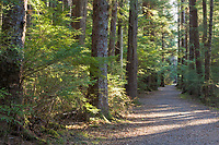 Pathway along the Sitka National Historic Park, Southeast, Alaska.