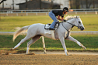 Derby hopeful Hansen works at Churchill Downs Trackside training center track, with Joel Barrientos in the irons, on Sunday March 18, 2012 in Louisville, Kentucky.