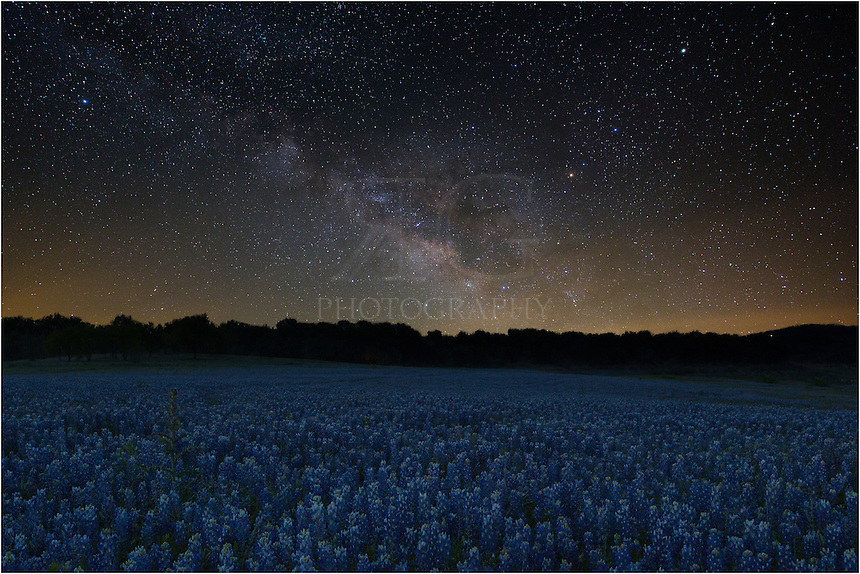 This Texas wildflower photograph is a composite of two images - one exposoed for the foreground of bluebonnets and the second for the beautiful Milky Way.