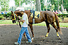I'm Steppin' It Up before The Cape Henlopen Stakes Delaware Park on 6/28/12