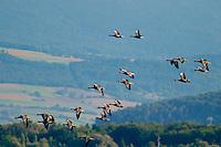 Duck Squadron