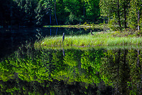 Little Rock Pond, Pharoah Lake Wilderness Area, Adirondack Forest Preserve, New York