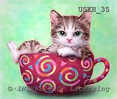 Kayomi, CUTE ANIMALS, paintings, CupKitty_M, USKH35,#AC# illustrations, pinturas ,everyday