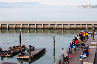 United States, California, San Francisco. Pier 39. The California sea lions attracts a lot of tourists.