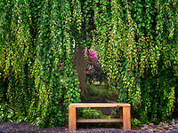Tree and bench with rhododendron. Oregon Garden, Oregon