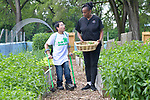 4-H ambassador Caleb Kinzinger, 16, from Freeburg, Ill and Jackie Joyner Kersee pick vegetables for a salad during a tour of the urban garden at the JJK Center on Thursday, May 30, 2019 in East St. Louis, Ill. (Tim Vizer/AP Images for National 4-H Council)