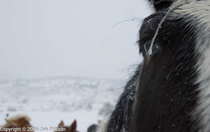 Horses during a blizzard outside Boulder, Colorado<br />