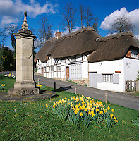 Great Britain, England, Hampshire, Wherwell: Spring Daffodils in front of white Timber framed thatched cottages | Grossbritannien, England, Hampshire, Wherwell: Traditionelle Reetdach-Haeuser am Dorfplatz, Osterglocken
