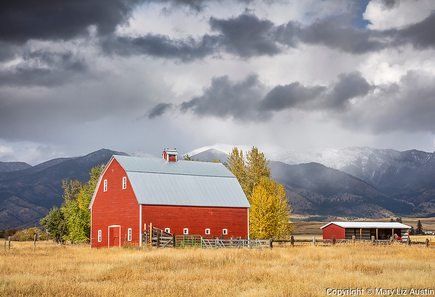 Gallatin County, MT: Red barn in early fall with storm clouds over the Bridger Range