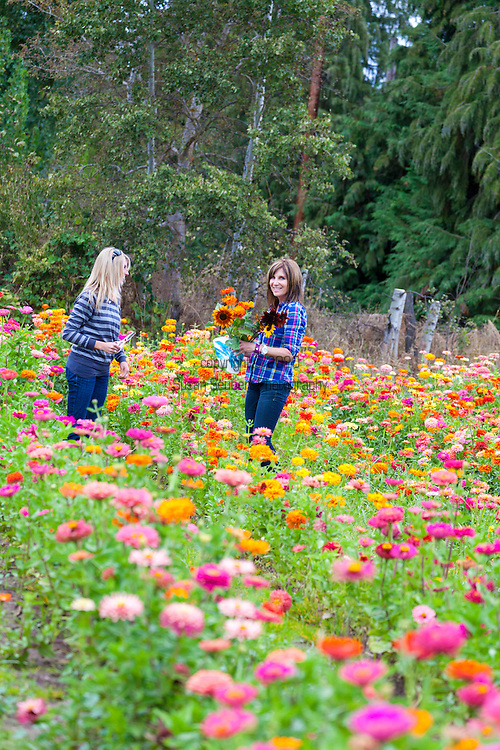 Rasmussen Farms, one of the larger farms located on Hood River's Fruit Loop, a scenic drive through the fertile Hood River Valley which is known for it's apple, pear and cherry orchards.  Kelly and Lindsay Nordstrom picking zinnias and sunflowers at the u-cut flower fields at Rasmussen Farms