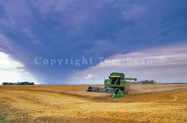 Rain storm threatening wheat field while farmer works to harvests crop with combine, East of Casselton, North Dakota, AGPix_0285.