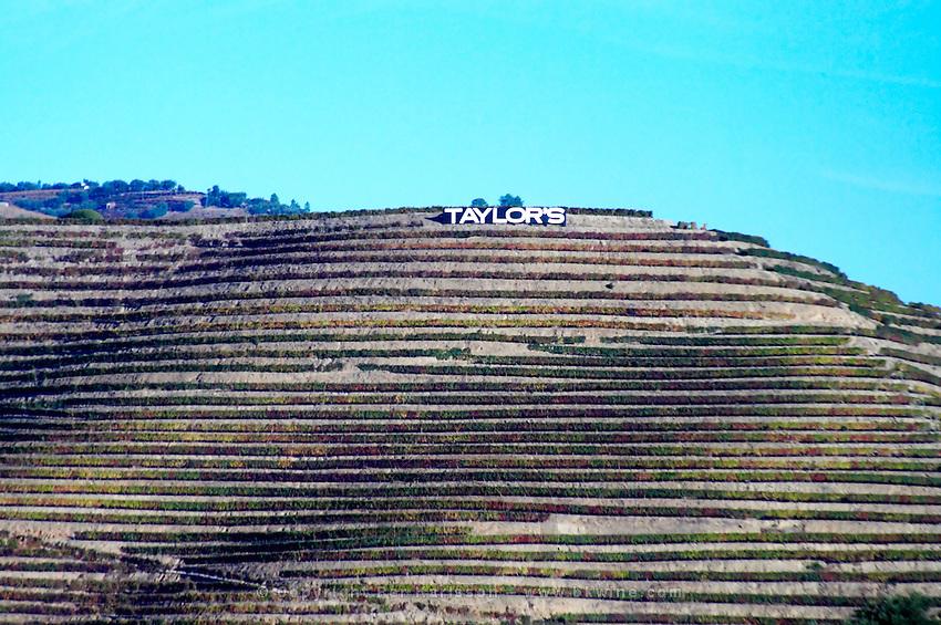vineyards taylor's sign near vale de mendiz douro portugal
