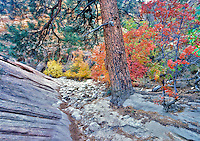 Fall colors in Zion National Park, Utah.