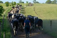 POLAND, Juchowo, organic milk cow farm, pasture land / POLEN, Juchowo, biologisch wirtschaftender Milchviehbetrieb, artgerchte Weidehaltung