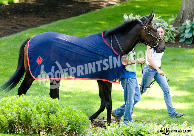 She's Not Lazy before The Justakiss Stakes at Delaware Park racetrack on 6/5/14