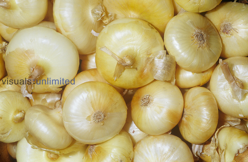 Onion variety Cipollini (Allium cepa)