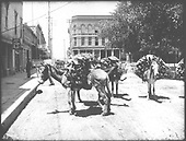 Burros loaded with either forest products or hides stopped on a Santa Fe street.<br /> Santa Fe, NM  Taken by Crayraft, Aaron B. - circa 1900