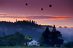Balloons and morning fog over vineyards near Oakville, Napa County, California