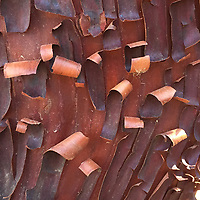 Manzanita Bark Detail, China Camp State Park, San Rafael, California, US