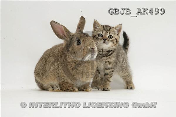 Kim, ANIMALS, fondless, photos(GBJBAK499,#A#) Tiere ohne Fond, animales sind fondo
