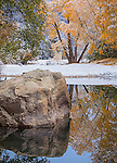 Yosemite National Park, CA: Fresh snowfall on fall foliage with calm reflections along the Merced River