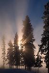 Sunburst at Blacksand Basin, Yellowstone