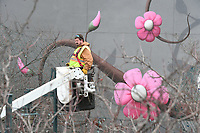 NWA Democrat-Gazette/J.T. WAMPLER Marshall Wood of Springdale works from a bucket lift Monday Jan. 8, 2018 taking down strands of lights from the Lights of the Ozarks display in downtown Fayetteville. The Fayetteville Parks Department employees started taking the lights down last week and will continue until the nearly 500,000 lights are down.