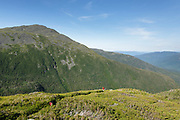 Hikers ascending the Six Husbands Trail in the Great Gulf Wilderness in Thompson and Meserve's Purchase, New Hampshire during the summer months; part of the Presidential Range in the White Mountains. Named after John Adams, 2nd President of the United States, Mount Adams is in the background.