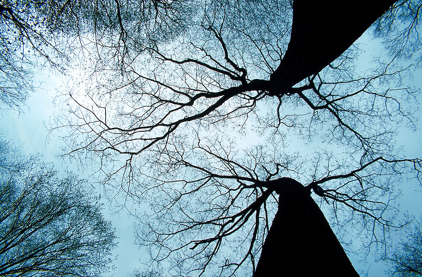 Winter trees outlined against the sky.