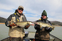 Jon Stein (left) and Kevin Hopkins, fisheries biologists with the Arkansas Game & Fish Commission, show two walleye they netted at Beaver Lake during a gill net study in January. Walleye are thriving in the lake and March is the month to catch them.